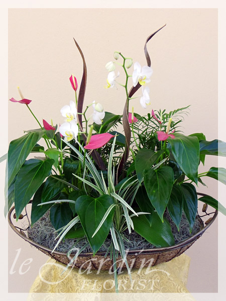Planters And Live Plants Florist Palm Beach Gardens